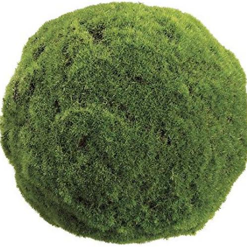 """3"""" Moss Ball"""