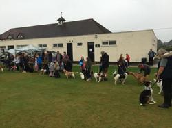 Woodcote Pet Services Dog Show
