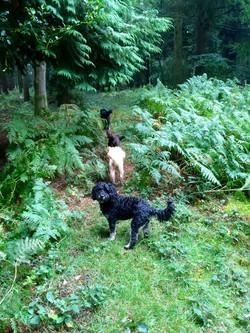 Checkendon Deer woods