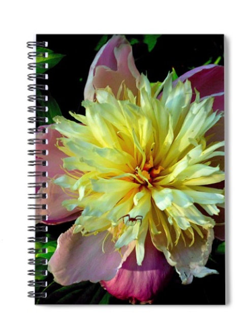 Peony and Spider Close-up Floral Photo, 6x8 Spiral Notebook