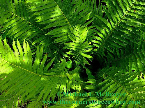 Closeup of Ferns, Outdoor Macro Photography