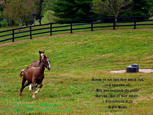 Young Thoroughbreds Racing with 1 Corinthians 9 vs 24, Horse Photography