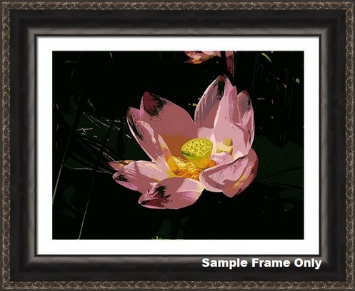 Pink Lotus Blossom Special Effects Floral Photo