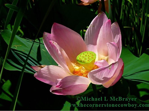 Lotus Blossom Greeting Card, White Mailing Envelope