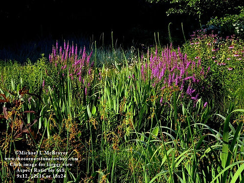 Floral Bog Garden Photo, Outdoor Nature Photography, Unframed Wall Art