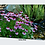 Thumbnail: Garden Stream and Purple Coneflowers Canvas Wall Art