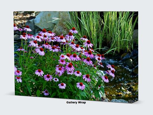 Garden Stream and Purple Coneflowers Canvas Wall Art