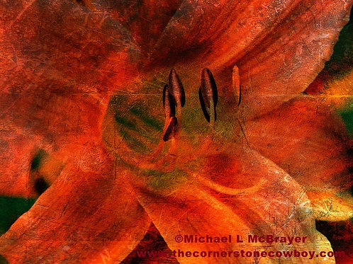 Abstract Daylily Photo, Red and Orange Floral Close-up
