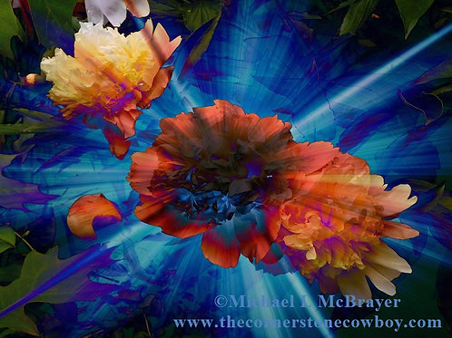 Peonies Multicolor Surreal Floral Photo, Abstract Nature Photography