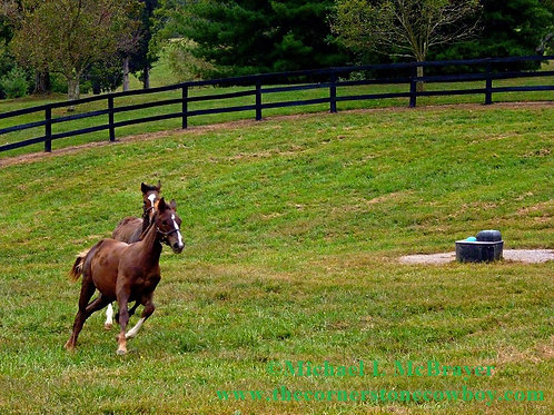 Two Young Thoroughbreds Racing, Horse Photography