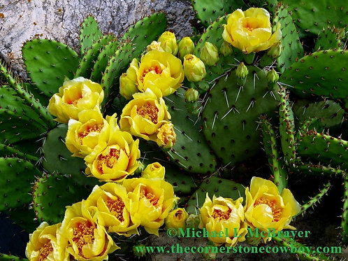 Yellow Prickly Pear Cactus Flowers, Floral Photography