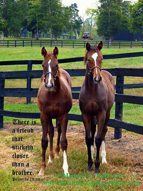 Two Young Thoroughbreds with Proverbs 18 vs 24, Horse Photography