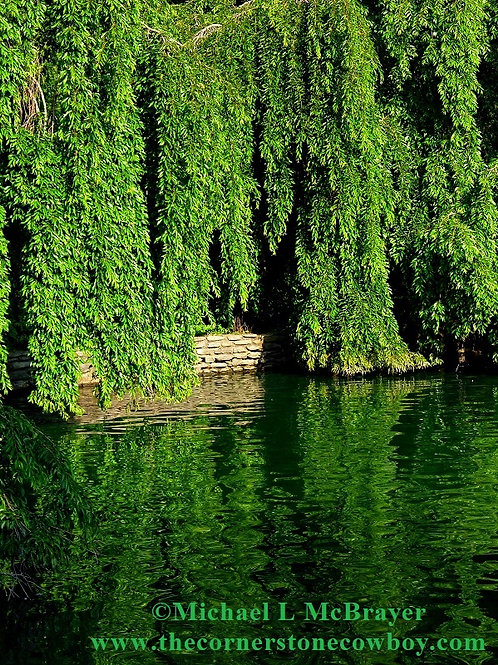 Weeping Willow Tree Reflecting in Lake, Nature Photography