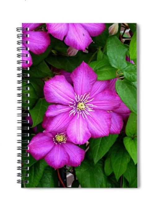 Close-up of Dark Pink Clematis Flowers, 6x8 Spiral Notebook