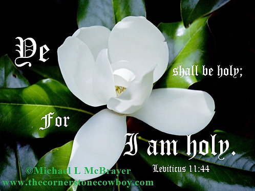 Southern Magnolia with Leviticus 11 vs 44, KJV Scripture Photo