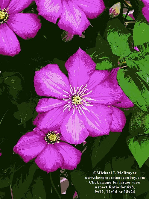 Close-up of Posterized Pink Clematis Flowers, Special Effects Photo