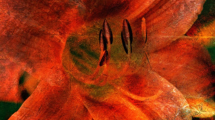 Daylily ORB Abstract