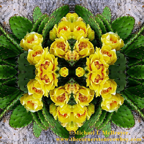Yellow Prickly Pear Cactus Flowers, Mirrored Abstract Photography
