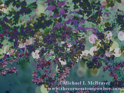 Purple Abstract Closeup of a Beauty Bush, Outdoor Nature Photography