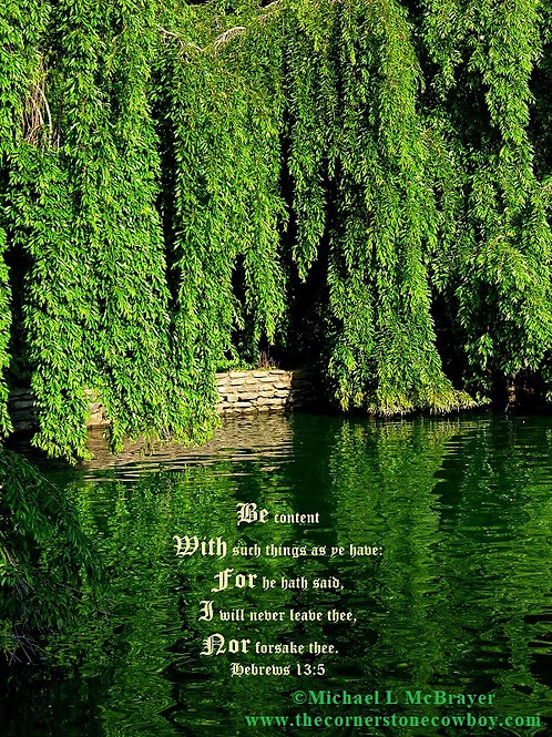 Weeping Willow Trees with Hebrews 13 vs 5, Scripture Photo