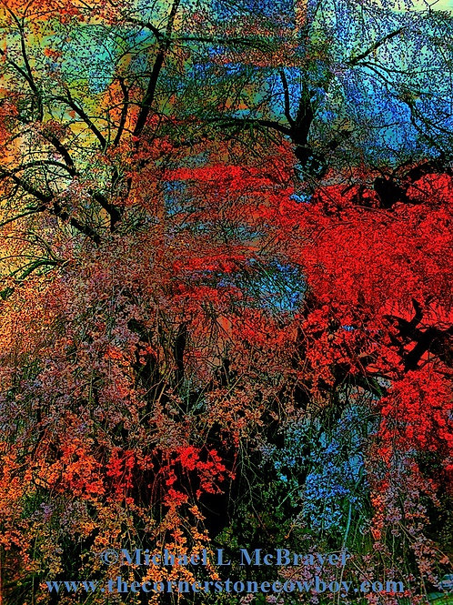 Multi-color Weeping Cherry Surreal Abstract, Photo Art