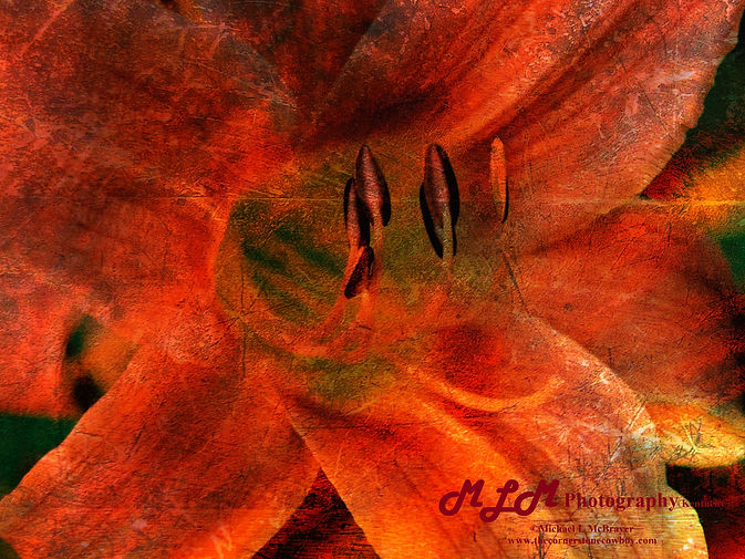 Daylily ORB PMHRW1 46x35 Ort Red Board P