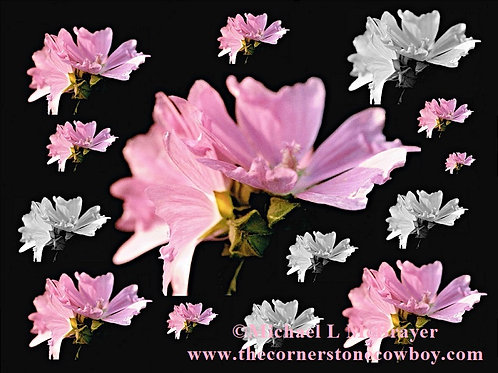 Pink and White Mallow Blossom Collage, Floral Composition Photo