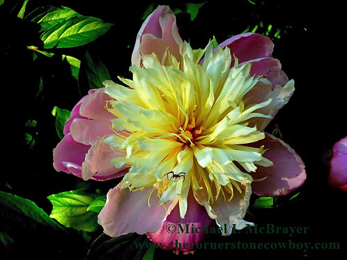 Peony and Spider Garden Photo, Close-up Floral Photography, Unframed Wall Art