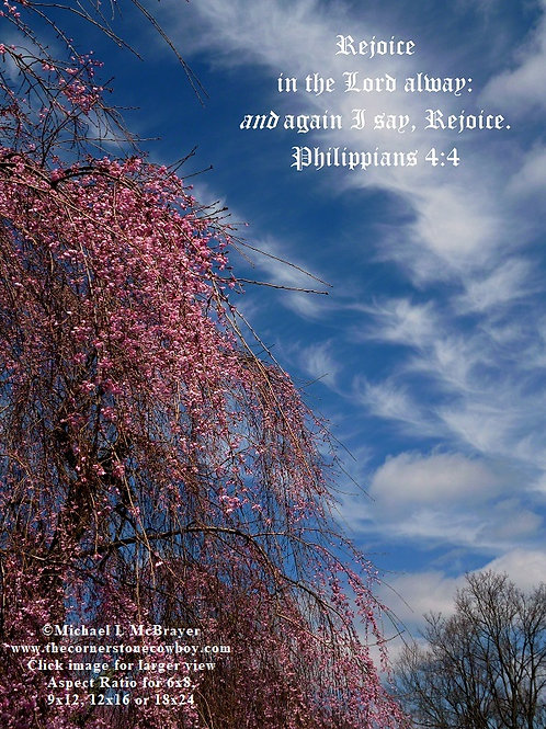 Pink Weeping Cherry with Blue Sky and Philippians 4 vs 4, Scripture Photo