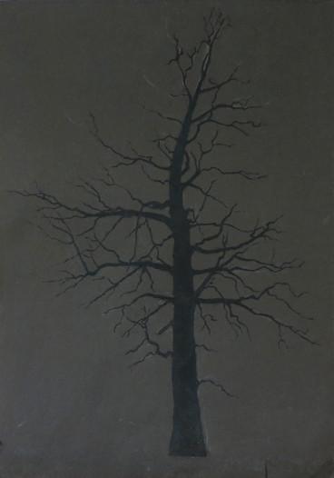 Etude d'arbre, 2015, huile sur papier