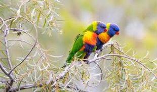 St Kilda Birds 1.jpg