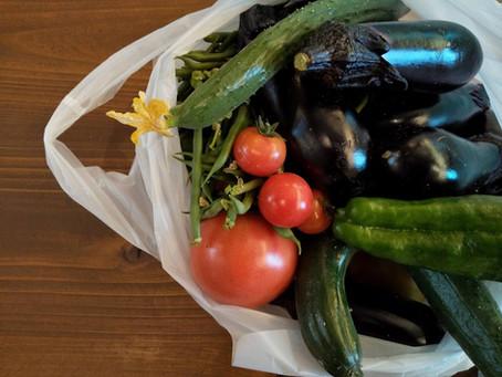 夏野菜で作った!山形の郷土料理
