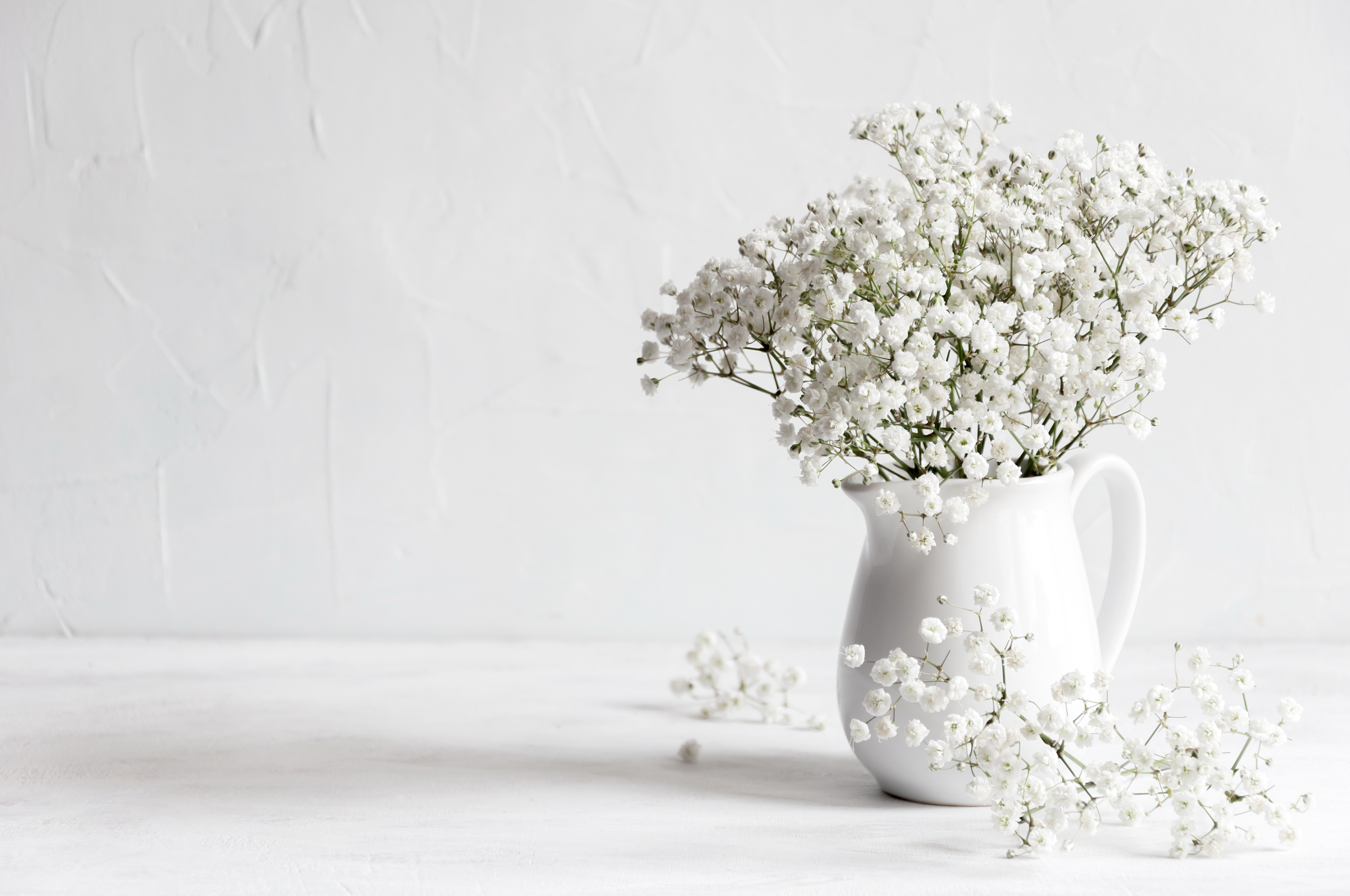 Soft home decor, white jug, vase with white small flowers on a white vintage wall background and on