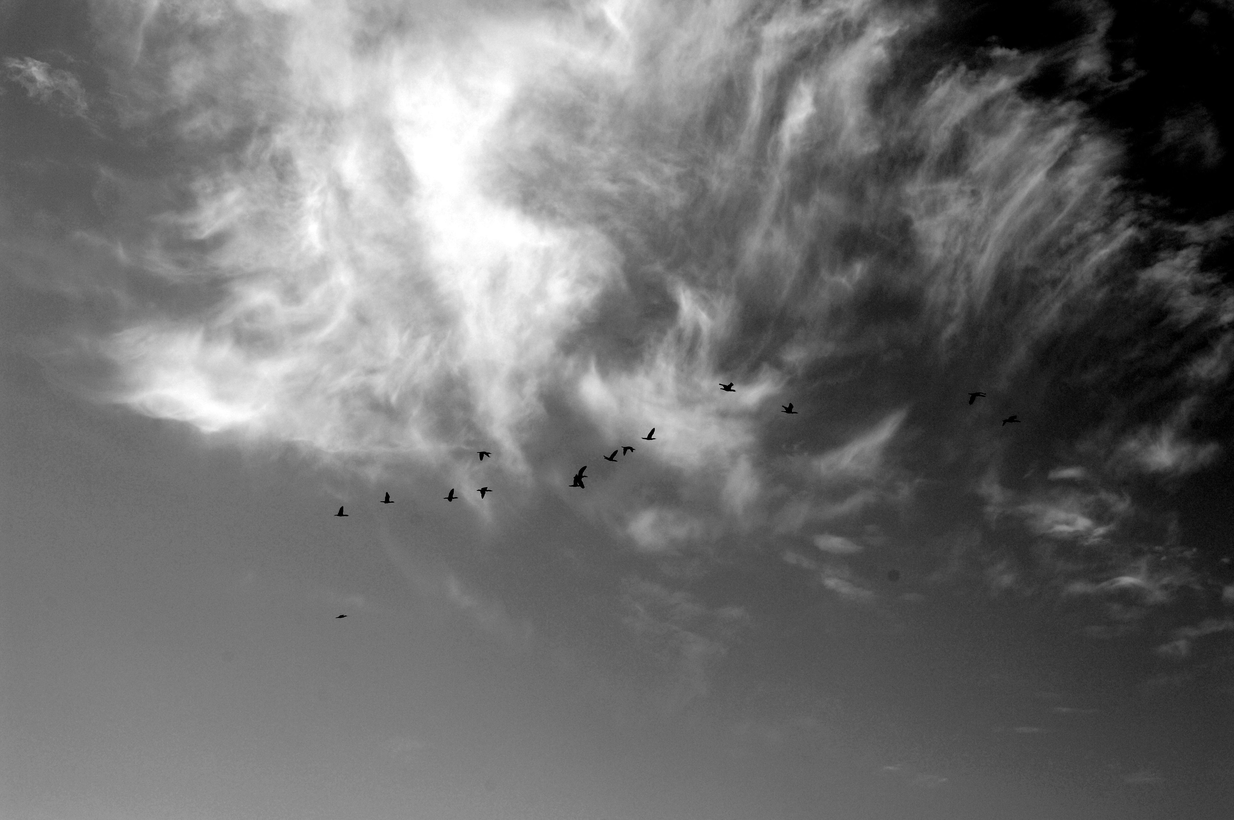 BIRDS OVER HEAD