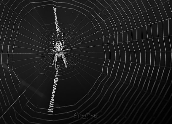 Itsy's web