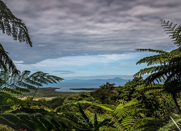 Mouth of the Daintree