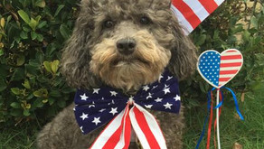 Keep your Pet Safe on the 4th of July