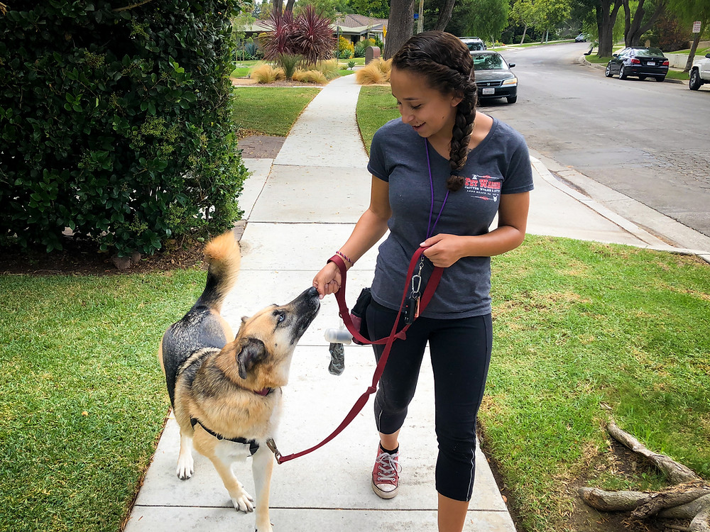 Dog trainer advice in Long Beach