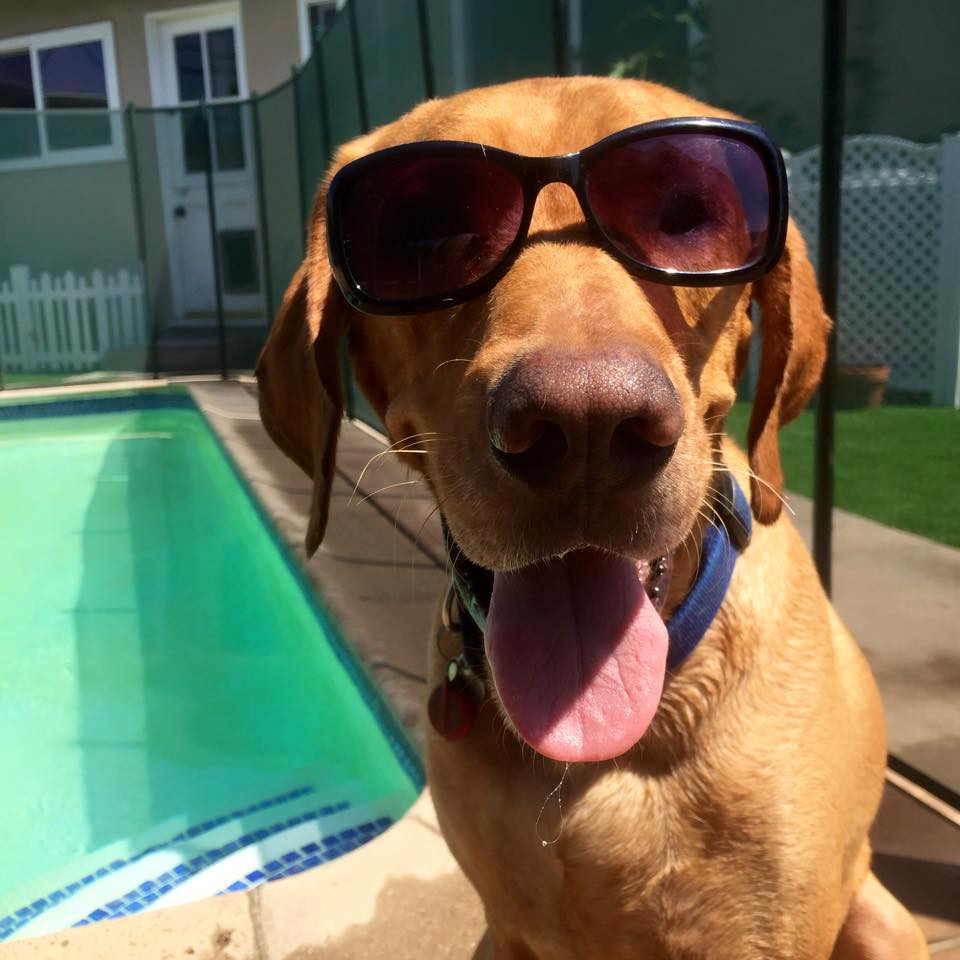 How To Keep Your Pet Cool This Summer | Pet Waggin' Pet Care