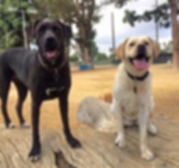 dog park visits Long Beach