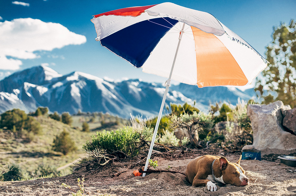 Summer Safety: Preventing Heat Exhaustion and Heat Stroke in Dogs | Pet Waggin' Pet Care