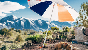 Summer Safety: Preventing Heat Exhaustion and Heat Stroke in Dogs