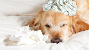 Canine Flu Reported in LA County