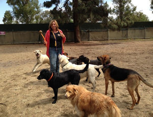 The REAL Reasons Why Professional Dog Walkers & Pet Sitters