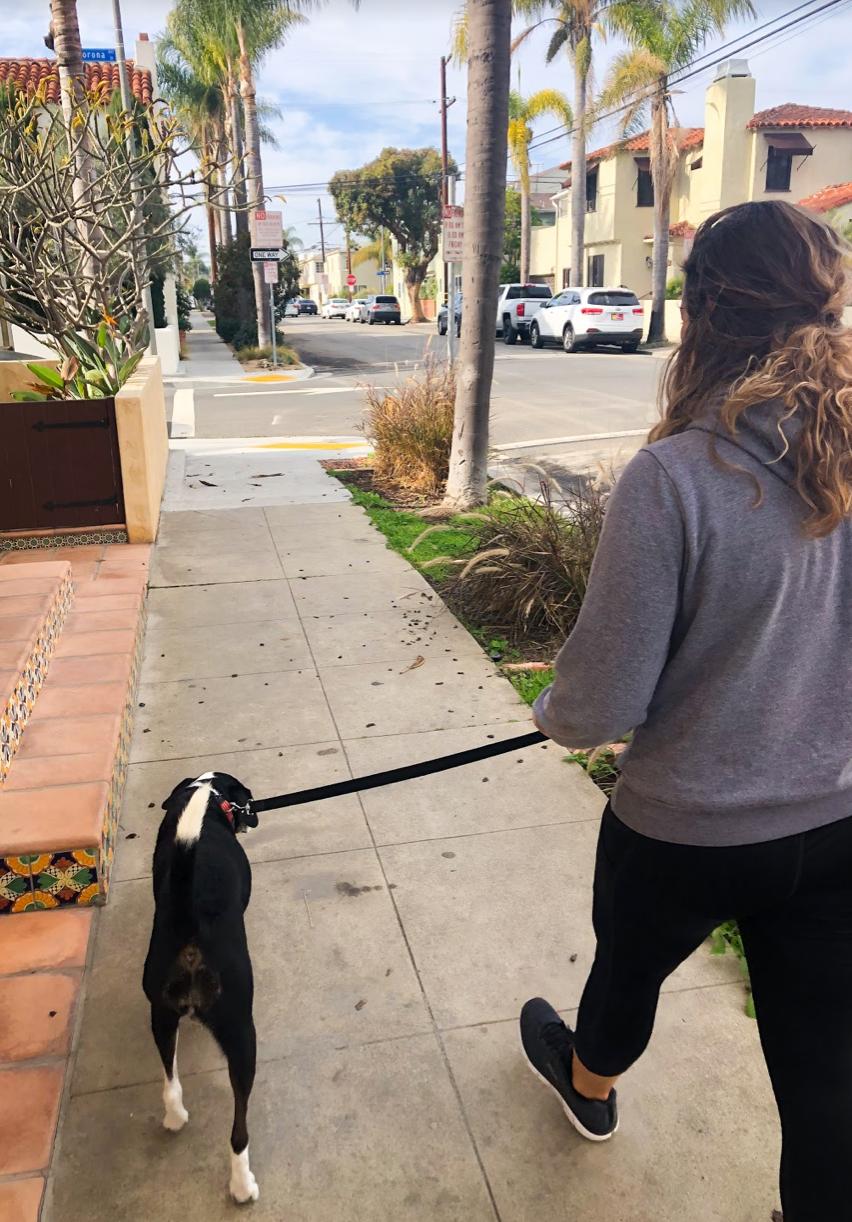 Downtown Long Beach | Pet-Friendly Long Beach | Pet Waggin' Pet Care