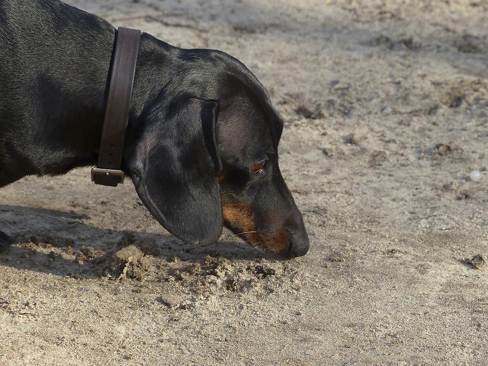 dog sniffing long beach california