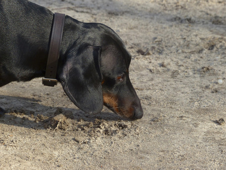 Let Them Sniff: Letting Your Dog Sniff On Walks Is So Important
