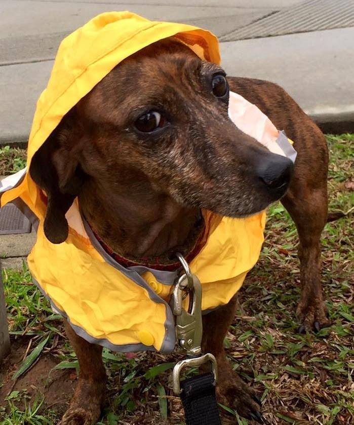 My Dog Doesn't Like the Rain | Pet Waggin' Pet Care