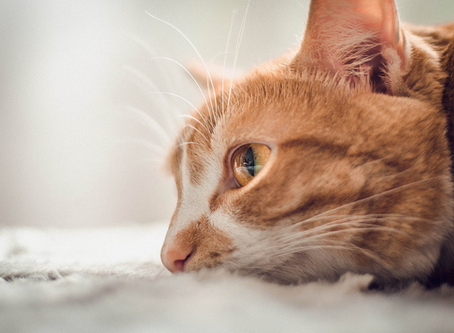 Summer Safety: Preventing Heat Exhaustion in Cats