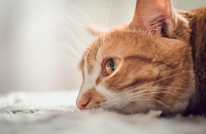 Summer Safety: Preventing Heat Exhaustion in Cats | Pet Waggin' Pet Care